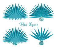 Blue agave or tequila agave plant. Vector set Royalty Free Stock Images