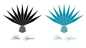 Blue agave or tequila agave plant. Agave logo design. Blue agave or tequila agave plant vector Royalty Free Stock Image