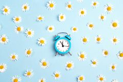 Blue alarm clock and chamomile flowers on blue background. Flat layer, top view Royalty Free Stock Photos