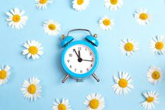 Blue alarm clock and chamomile flowers on blue background. stock photo