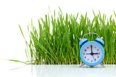 Blue alarm clock with grass. Blue alarm clock with fresh green grass isolated Royalty Free Stock Image