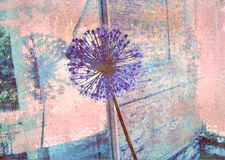 Blue allium flower reflected in a window pane. Royalty Free Stock Photo
