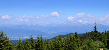Blue alps in styria. Alps covered with snow view through forest of green fir-trees in summer time, view on Koflach Styria, Austria Royalty Free Stock Image