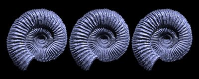Blue Ammonite Fossils Royalty Free Stock Photos