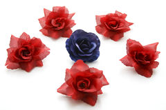 Blue And Red Flower Blossoms Stock Images