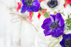 Blue  anemone flowers Royalty Free Stock Photography