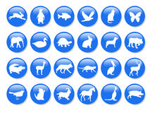 Blue animal icons. Blue icons with fauna on the white Stock Photos