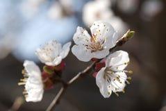 Blue april Stock Photo