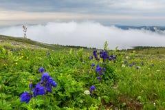 Blue aquilegia blooms against the background of mountains in the fog. Altai Krai. Blue aquilegia blooms against the background of the mountains in the fog Stock Photography