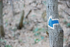Blue arrow marking. A tourist route on a tree Stock Photography