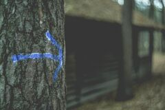 Blue arrow on tree Royalty Free Stock Images