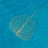Blue art surface with dried leaf Royalty Free Stock Photo