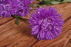 Blue aster against the brown table Royalty Free Stock Images