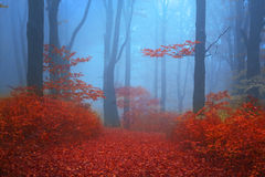 Blue atmosphere in a foggy forest with red leaves Royalty Free Stock Photo