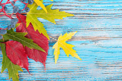 Blue autumn background Royalty Free Stock Image
