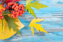 Blue autumn background Royalty Free Stock Photos