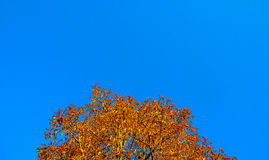 Blue autumn Stock Photos