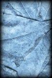 Blue Autumn Foliage Background Vignetted Grunge Texture royalty free stock image