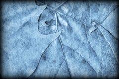 Blue Autumn Foliage Background Vignetted Grunge Texture stock photo
