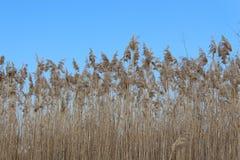 Blue autumn sky. Dry plants. Landscape. stock photography