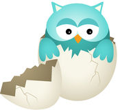 Blue Baby Owl in Egg Stock Images