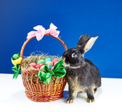On a blue background beautiful bunny and basket with eggs Royalty Free Stock Photos