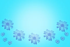 Blue background with beautiful daisies Stock Images