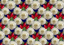 Blue background of bouquet large white roses and red buds Stock Photos