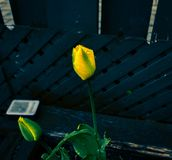 Best looking blue background with yellow flowers stock photos