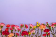 Blue background with carnations flowers and copy space. Top view royalty free stock photography