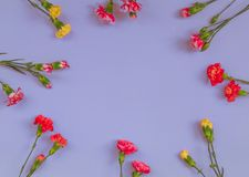Blue background with carnations flowers and copy space. Top view stock photo
