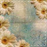 Blue background with chamomile Stock Images