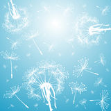 Blue background with dandelions Stock Photo