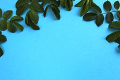 Blue background decorated with succulent green leaves. Extract, artistic, background image, blue, bright, closeup, colored, decorate, decoration, intent stock photo
