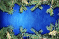 Blue  background with fir Royalty Free Stock Photo