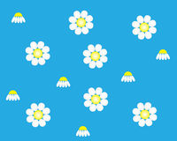 Blue background with flowers camomile Royalty Free Stock Photo