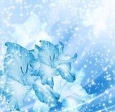 Blue background with gladioli Stock Photo