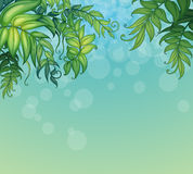 A blue background with green leafy plants Royalty Free Stock Images