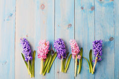 Blue background with hyacinthus Royalty Free Stock Images