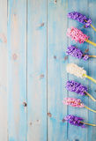 Blue background with hyacinthus Stock Photos