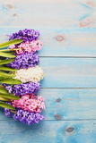 Blue background with hyacinthus Stock Image