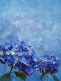 Blue background with hydrangea flowers Stock Image
