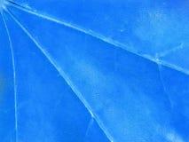 Blue background, maple leaf, macro, close-up royalty free stock image