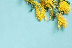 Blue background with mimosa branch for spring holidays. Womans day, Mothers day, Easter. Festive composition, copy space stock image