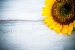 Blue background with sunflowers Stock Photo