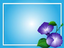 Blue background template with morning glory flowers. Illustration vector illustration