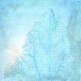 Blue background with a textured leaf Royalty Free Stock Photos