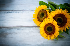 Blue  background with three sunflowers Stock Photo
