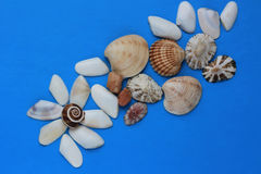 blue background with various sea shells Royalty Free Stock Images