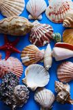 Background of various shells. Blue background from various shells, arranged in random order Stock Images
